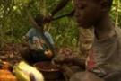 Nestle'ye yine çocuk işçi suçlaması