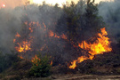 Tatil sitesi yakınında korkutan yangın