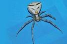 Bu örümcek insan yüzlü!