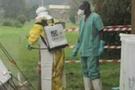 Kongo'da Ebola salgını: 31 ölü