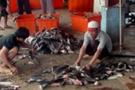 Çevre dostu sahte 'köpekbalığı yüzgeci' yemeği