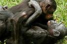 Maymunların yaşam alanları tehdit altında