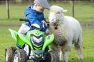 2 yaşındaki çoban görenleri şaşkına çeviriyor
