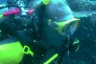 İklim değişikliği: Okyanuslarda asitlenme alarmı