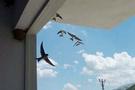 Böylesi de var! Kuşlar için bakın ne yaptı