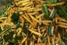 DERGİ - Gelecekte gıda sektörü böceklere mi dayanacak?