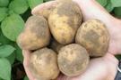 Patatesin kilosunu kim 5 lira yaptı?