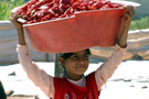 Çocuk işçi oranı düşüyor
