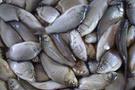 Türk balıkçılar AİHM ' e başvurucak