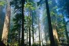 Ormanları madenler mi bitirecek?