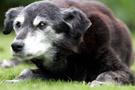 Bu köpek tam 203 yaşında