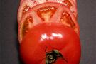 ABDde domates yasağı kalktı