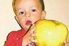 Bir kiloluk dev elma