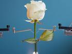 Bilim adamları elektronik bitki üretti