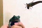 Kurbağa belgeseli çekmek isterken ortaya bakın ne çıktı