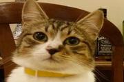 Kedilerin dünyayı fethettiğinin bilimsel kanıtı!