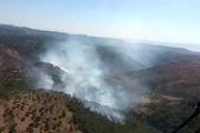 Ayvalık'taki yangın ucuz atlatıldı: 2 gözaltı var