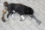 İşçiler korkunç manzarayı ihbar etti: Köpek katliamı!