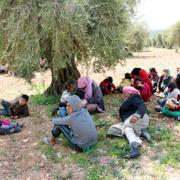 Afrin'den kaçanlar zeytinliklere sığındı...