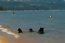 Anne ayı ve yavruları denizde böyle eğlendi!