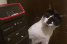 CD-rom gören masum kedi izleyenleri güldürdü