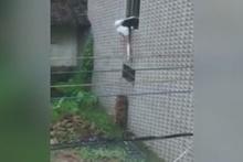 Genç kız eve pencereden girmek isteyince...