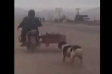 Köpeği hareket halindeki motora zincirleyen adam