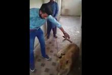 Aslan eve gelen misafire böyle saldırdı