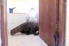 Banyoda karşılaştığı hayvanla şoke oldu!