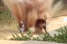 Mayına basan köpek havaya uçtu! Dehşet anlar kamerada