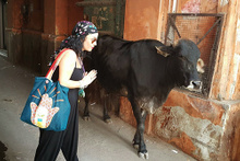 Hindistan'da inek olmak!