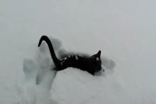 Hayatında ilk kez kar gören kediler