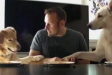 İki köpek ve bir adam spagetti yeme yarışına girerse...