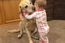 Köpekler ve bebeklerin muhteşem dostluğu