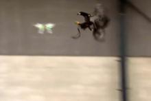 Drone sorununa kartal çözümü