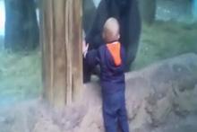 Yavru gorille saklambaç oynayan çocuk