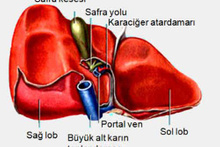 Karaciğer yetmezliği ve karaciğernakli