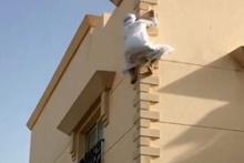 Örümcek Adamın Birleşik Arap Emirlikleri şubesi