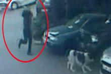 Kağıthane'de akıl almaz olay! Demir sopa ile köpeğini dövdü