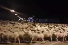 Çobanı uyutup gecelere akan koyunlar