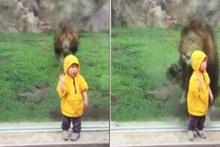 2 yaşındaki çocuk aslan yemi olacaktı!