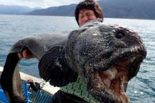 Çılgın balıkçıların tuhaf avları