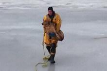 Köpeği donmuş gölden kurtaran güzel insanlar