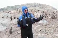 Opera dinleyen penguenler topluca kaçtı