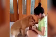 Sahibinin gözyaşlarına dayanamayan köpek