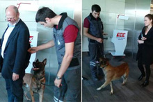 Avusturya yolcularına köpekli arama!