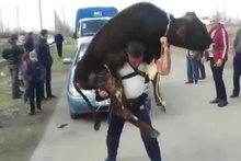 Azeri pehlivandan ilginç güç gösterisi