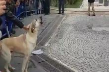 Eyüp'te arkadaşlarının hakkını arayan köpek!