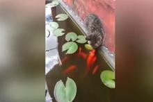 Balık, kediyi öptü