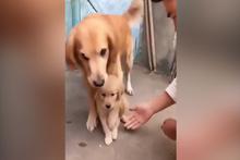 Yavrusunu kimseye elletmeyen anne köpek!